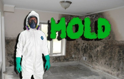 Mold Remediation, Removal and Containment